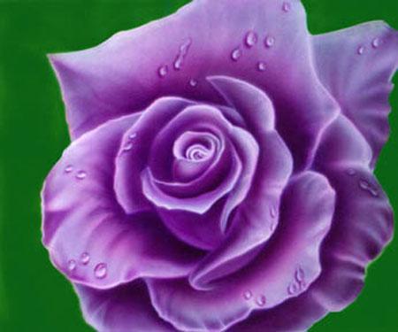 short essay rose flower